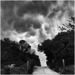 Mammatus clouds over Collendina (Stephen J W) Tags: film beach clouds australia victoria bronica tmax400 pmk sqb mammatus pryo v700 bellarine ei320 12100 ps80 tmy2 collendina 12mins24degc