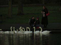 Mutter (Bricheno) Tags: park woman bird scotland swan pond child glasgow father mother escocia swans szkocja richmondpark schottland muteswan scozia cosse  esccia   bricheno scoia