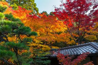紅葉 - 高桐院 大徳寺 / Koutou-in Daitoku-ji Temple