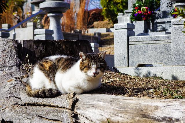 Today's Cat@2015-01-01