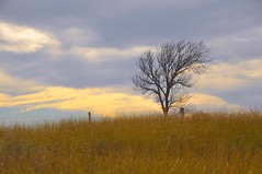 Lone Tree in the Winter (faungg's photos) Tags: winter tr