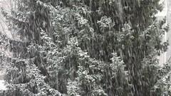 White Christmas in Berlin (andtor) Tags: christmas winter berlin weihnachten firstsnow 2014 ersterschnee
