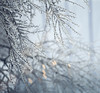 Branches wrapped in ice (Cyrielle Beaubois) Tags: winter light canada cold tree ice outside frozen bokeh montreal branches january québec froid throughthewindow 2015 canonef70200mmf40lusm canoneos5dmarkii cyriellebeaubois