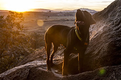Dobro trascending (Recless media) Tags: travel sunset summer dogs rock canon mexico outdoors labrador sunny climbing 7d reclessmedia