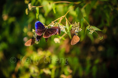 Taiwan-121113-338 (Kelly Cheng) Tags: travel color colour green tourism nature animals horizontal fauna butterfly daylight colorful asia day taiwan vivid nobody nopeople colourful traveldestinations 茂林 northeastasia