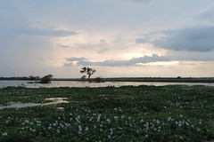Weerawila Lake - Night Falls ... (Drriss & Marrionn) Tags: travel sunset sky lake water landscape asia outdoor wetlands srilanka ceylon uva grasslands hyacinth southasia uvaprovince weerawilalake