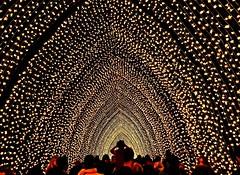 Cathedral of Light (missgeok) Tags: lighting people festival night spectacular nightlights nightshot magic perspective sydney warmth australia circularquay popular fairyland sydneybotanicgarden cathedraloflight vividsydney2016