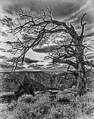 Flaming Gorge Tree (monochrome) (Martin Saunders) Tags: blackandwhite tree monochrome utah canyon flaminggorge gorge select