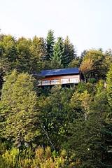 cabaa en lo alto del bosque (Alita Garca) Tags: wood patagonia argentina forest cabin arboles grove bosque pinos pinar cabaa neuquen villalaangostura