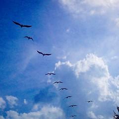 sky beach birds zen junobeach outwalking