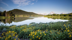 Oxbow Bend (Jeremy Duguid) Tags: park morning travel flowers trees summer mountains reflection nature sunrise canon river landscape dawn butte bend snake grand jeremy mount national teton tetons moran oxbow duguid