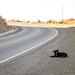 Cachorros na beira da estrada