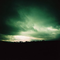 little fluffy cows (fotobes) Tags: silhouette clouds mediumformat square cow xpro crossprocessed cows yorkshire hill grain silhouettes minimal negativespace vignetting yor
