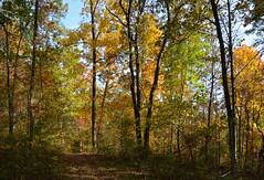 Broughtons Fall Colors (thoeflich) Tags: fall fallcolors autumnleaves autumncolors marietta falllandscape broughtonswildlifeeducationarea