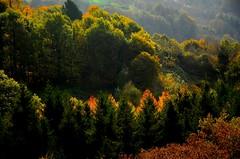 _DSC7108 (andoni.guridi) Tags: autumn fall spain otoño navarra 2014 basaburua
