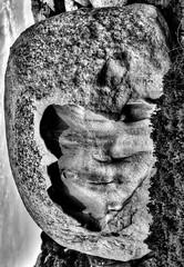 Entre Calvi et Galeria. (jfrcorsica) Tags: nikon corse pierre corsica