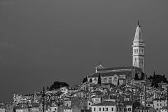 Monochromatic Rovinj (Francesca's Photography) Tags: blackandwhite monochrome town mediterranean croatia steeple rovinj adriatic istria istra santaeufemia svfuma