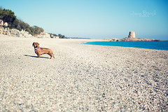 Luana (Ivana Barrili) Tags: marina mare sa spiaggia ogliastra bassotto barisardo bar