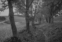 paseo bajo la lluvia (Antonio GB) Tags: lluvia paisaje analogue rodinal carrete nikonfa analgico campia ilfordpanf50 nikon50mmf18e film:iso=50 film:brand=ilford film:name=ilfordpanf50 filmdev:recipe=9773