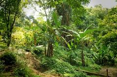 aqua azul (karolajnat) Tags: mountain green azul mexico agua aqua pyramid palm jungle waterfalls ruinas palenque chiapas mayas misolha aquaazul