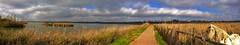 Panoramica (vic_206) Tags: horse water clouds caballo agua phone pano panoramica nubes celular móvil estany ivarsdurgell nokialumia1020