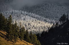 Before the Storm (Spokeannie) Tags: trees winter frost cloudy hoarfrost foggy sunny hills idaho clear forests coeurdalene mixedweather weatherlayers