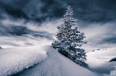 marbled sky (gregor H) Tags: winter sky snow tree austria triangle frost cloudy tint marbled hoar vorarlberg sonnenkopf