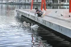 STAFF FROM CRYSTAL BOAT RESTAURANT FEED THE BIRDS EVERY DAY REF-100885 (infomatique) Tags: ireland dublin restaurant gulls chinese streetphotography sigma swans feedingthebirds dublindocklands merrill dp3 williammurphy grandcanaldock infoma