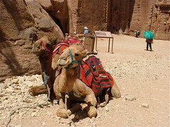 Petra: cammelli in sosta (costagar51) Tags: petra natura jordan animali giordania anticando panoramafotográfico thebestofmimamorsgroups greatshotss contactgroups flickrsportal