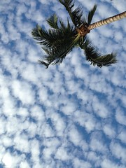 Cool Miami Clouds (miamism) Tags: coconut palm lookup palmtree coconutpalm miamirealestate miamisky miamisms miamiclouds miamipalms miamipalmtrees