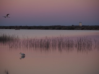 sunset flamingo - (pink) - la puesta del sol del flamenco