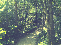 selva (holaaefe) Tags: sol brasil lago arboles selva verano