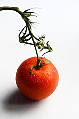 Just a Tomato (PhotosbyDi) Tags: stilllife tomato highkey hmm redandgreen nikond600 macromonday tamronf2890mmmacrolens