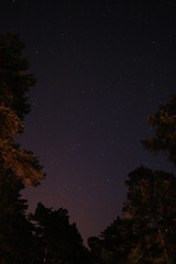 IMG_7798 (piotrasss3) Tags: trees night forest stars astrophotography astronomy nightsky