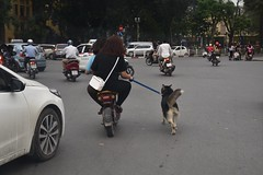 Motorbike dog walking ion Hanoi (Linas G) Tags: street asia traffic vietnam hanoi oldquarter