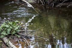 Damm (Lina Rigney Thrnblom) Tags: green water pond damm vatten grnska