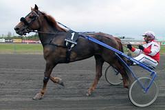 IMG_2383 (lovelymelancholy) Tags: horses horse hevoset hevonen horseraces ravit imrautio ravihevonen oulunravirata