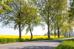 IMG_7021 (n_kot) Tags: spring poland wiosna krajobraz la widnica dolnolskie wojewdztwodolnolskie gminamarcinowice