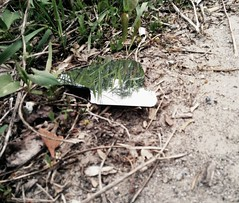 Mirror is on the ground but you can see the sky in the reflection . . . (S5sh) Tags: brown reflection green broken beautiful grass leaves photography mirror mud random object dirt earthy stuff ssh twigs