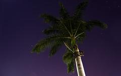 stars and tree (Lukas Gonalves) Tags: longexposure blue sky tree green night stars nikon 1855 startrails d3100
