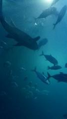 Plymouth Aquarium - Predators Tank 7 (jack_lanc) Tags: plymouth acquarium wildlife fish sharks conservation marine biology devon predator predators