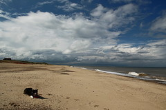 A Week on the Beach (sharongellyroo) Tags: beach sunshine seaside holidays norfolk bordercollie ki wintertononsea