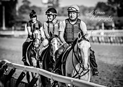 Clement Trio (EASY GOER) Tags: park horses horse sports belmont racing races thoroughbred equine
