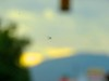Bird Residue On Windshield (Chic Bee) Tags: speedwayblvd dirtywindshield canonsx60hs rainyday cloudy filteredlight morningcoffeerun tucson arizona southwesternusa dof blur catalinamountains