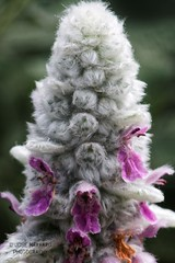 Flower 4 (gorrarroja) Tags: espaa flower macro valencia spain flor macrophotography macrofotografa
