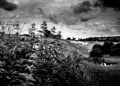 (Nico_1962) Tags: bw zwartwit nederland thenetherlands zuidlimburg dof bokeh heuvels hills plant planten lucht rangefinder manualfocus leica m240 leicam summarit35mm landschap landscape clouds wolken