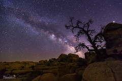 Overwatch (Tassanee28) Tags: california longexposure trees stars landscapes space joshuatree astrophotography astros milkyway canon6d
