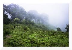 leeches trail (mamuangsuk) Tags: india misty foggy kerala rainy slope threat bharat reckless thekkady leech kumily travelogue southernindia protectedarea mountaintrek 35mmprime periyartigerreserve sangsue periyarwildlifesanctuary mamuangsuk leechestrail animalhazard
