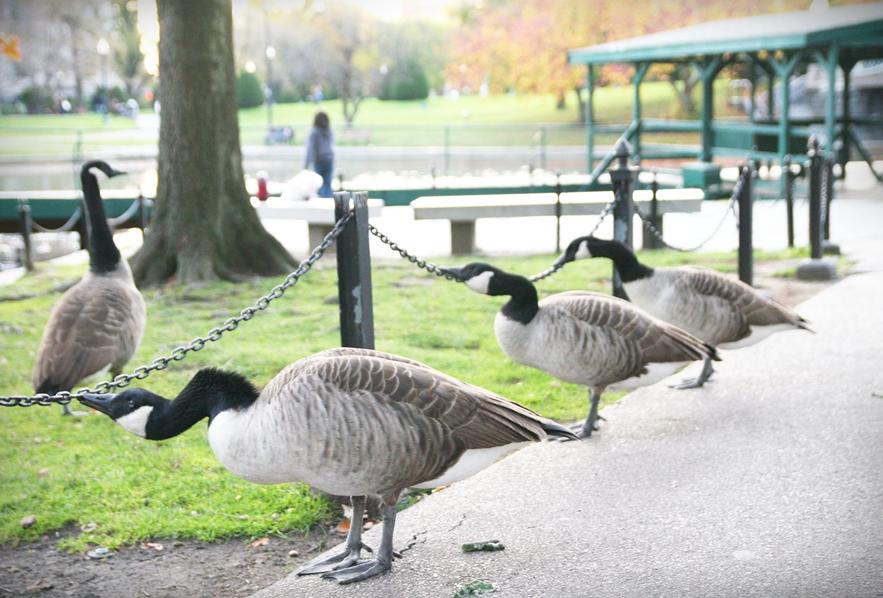 boston-common-public-garden-autumn-12