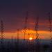 sunset in boise